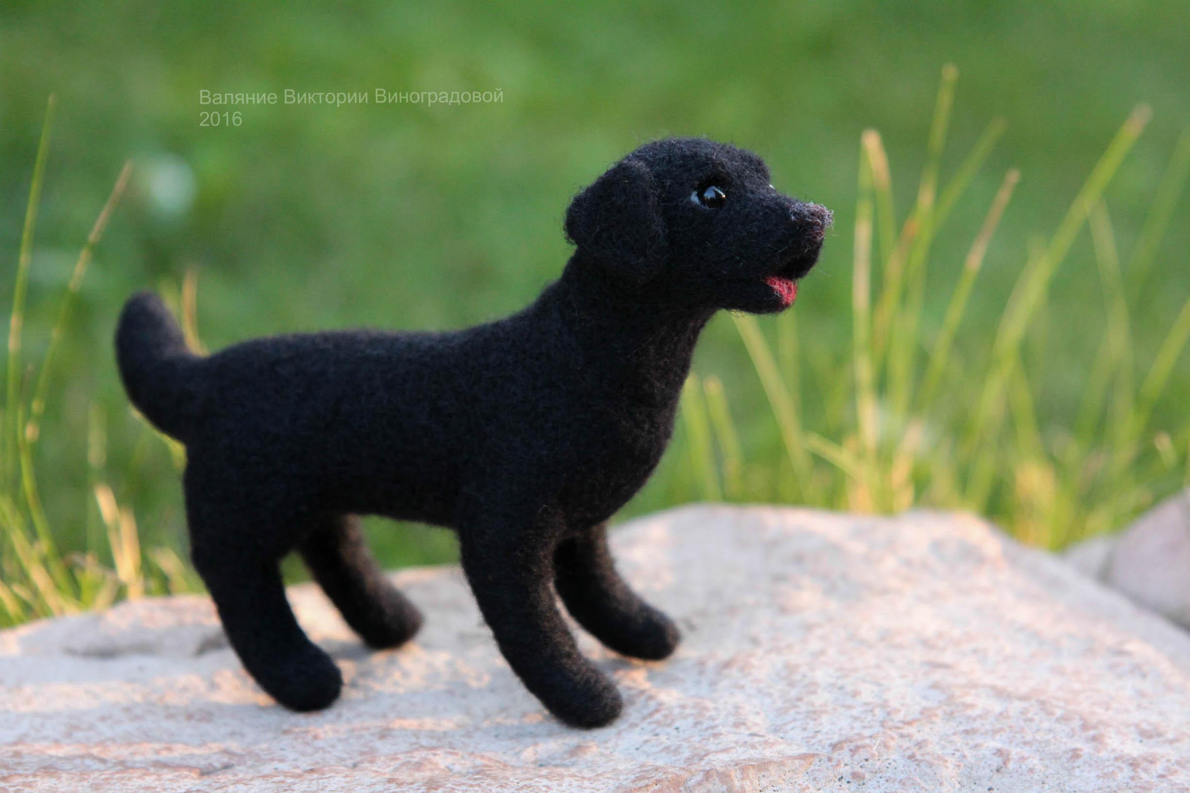 черный лабрадор