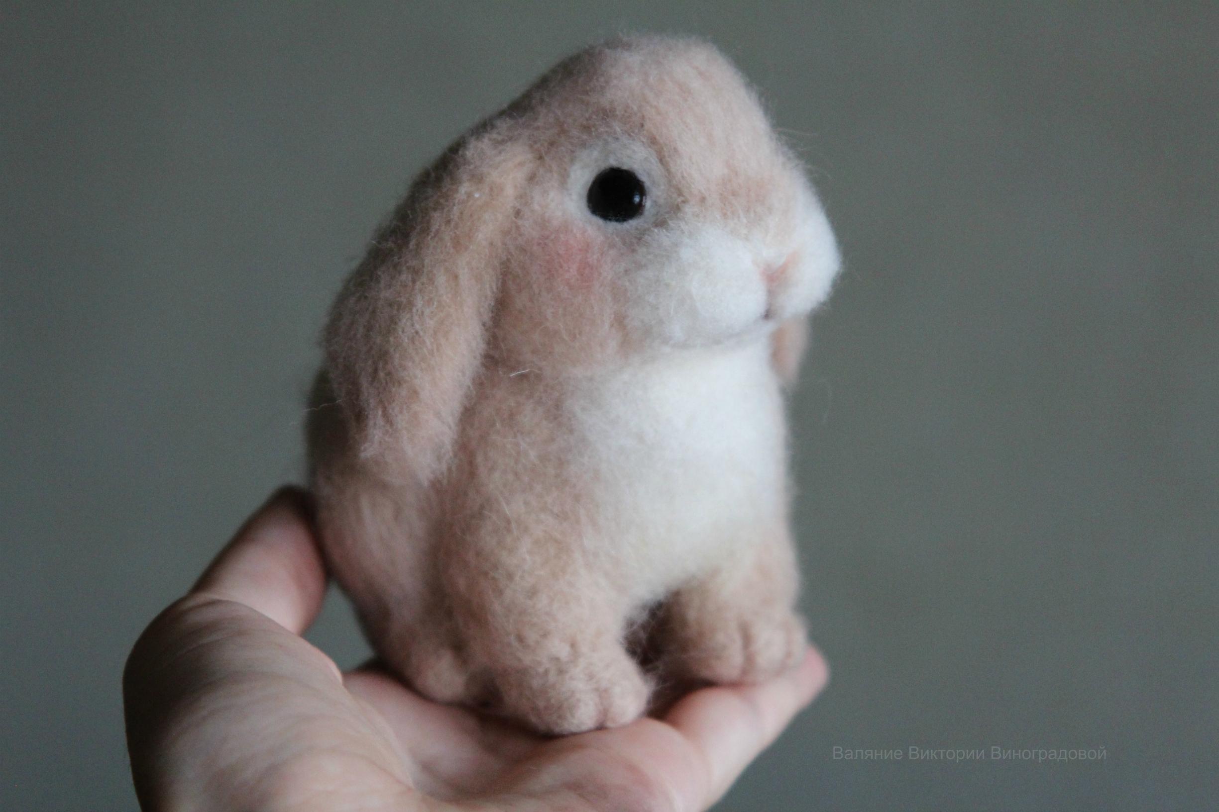 милый кролик