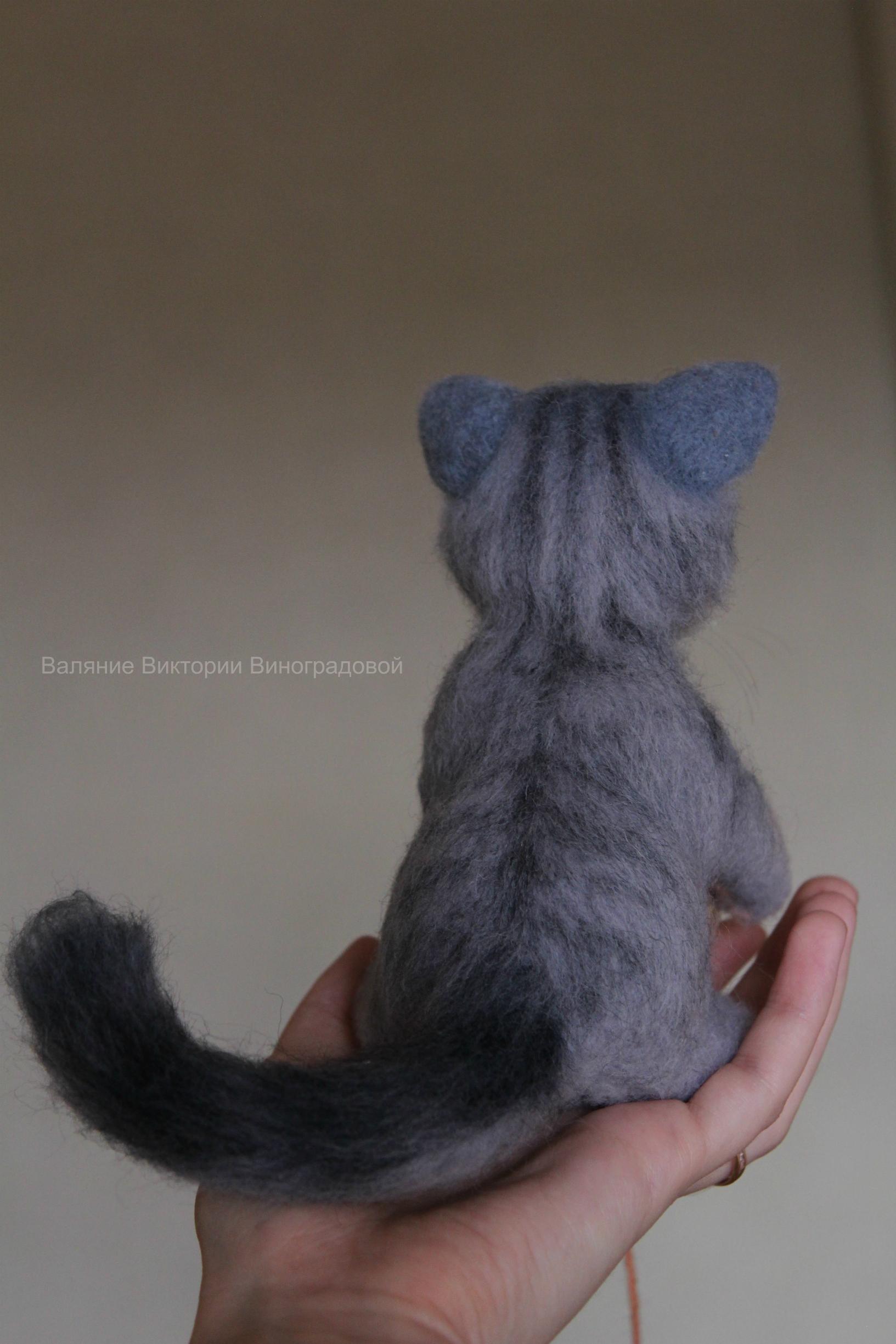 серый котик спина
