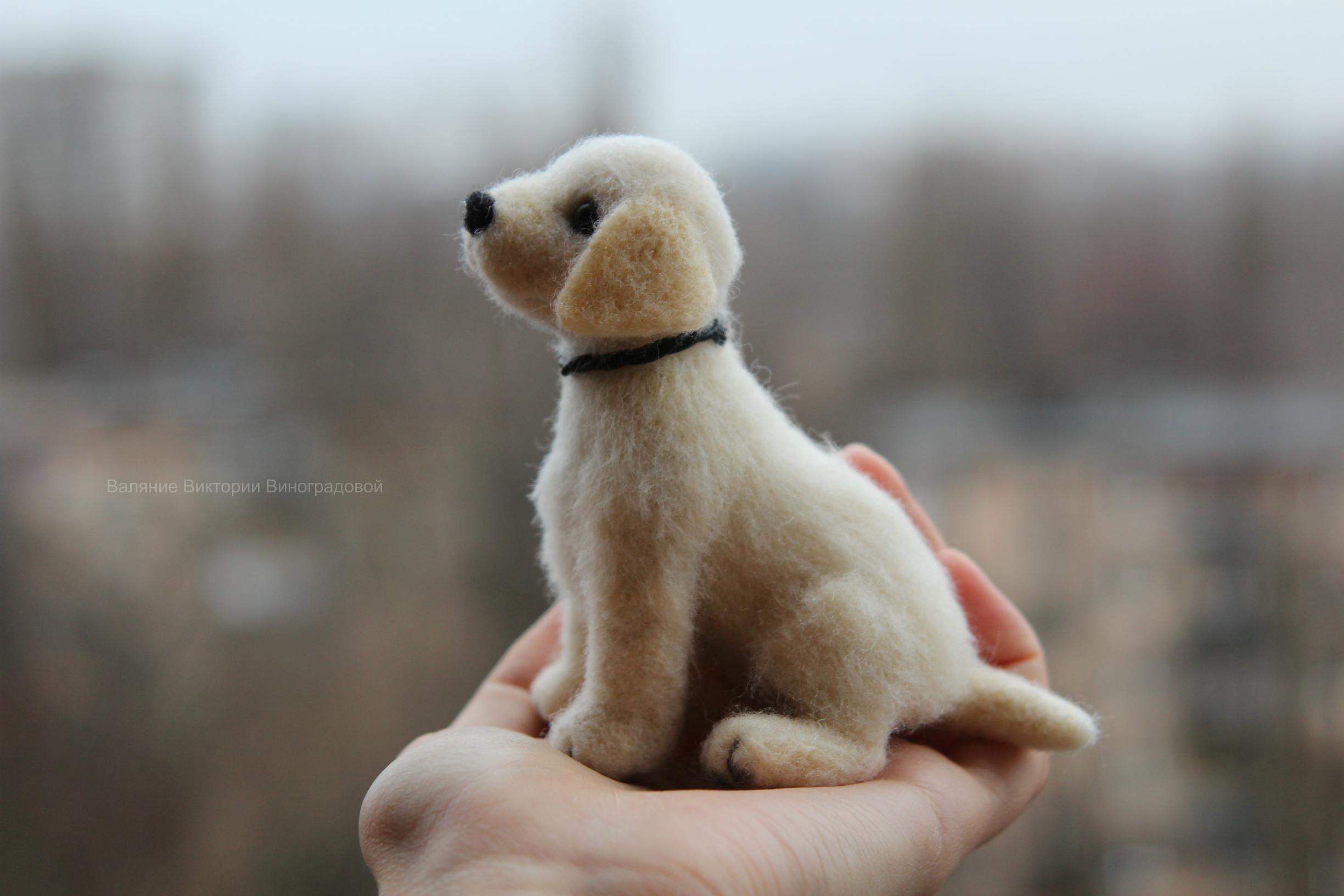 щенок лабрадор
