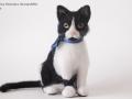 Кошечка портретная по фото