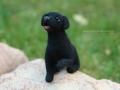 чёрный лабрадор