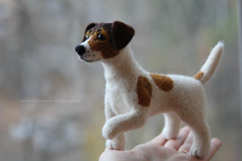 собака Джек Рассел терьер