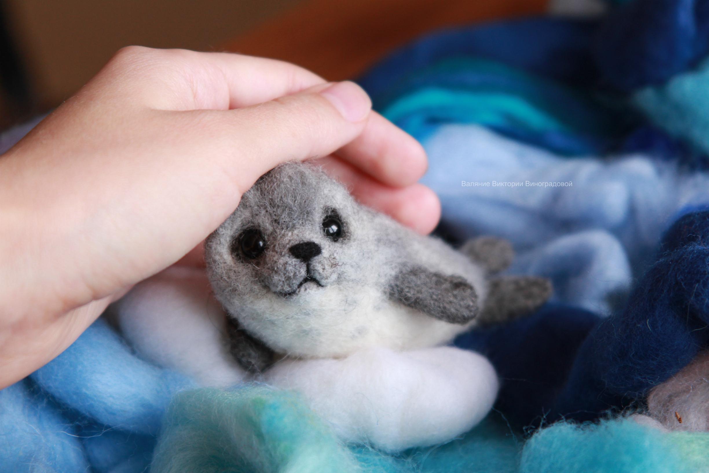 тюлень